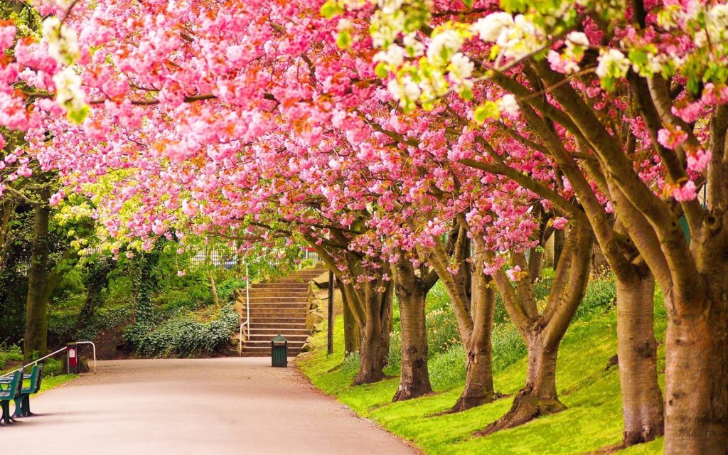 10 Most Popular Wallpapers Hd Nature Spring FULL HD 1080p For PC Background 2018 free download spring wallpapers hd download free 1024x640