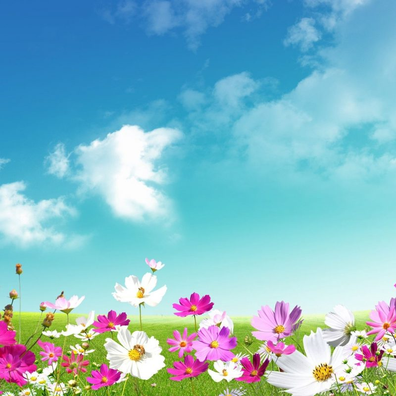 10 Best Free Spring Background Images FULL HD 1080p For PC Desktop 2018 free download spring wallpapers hd download free pixelstalk 6 800x800