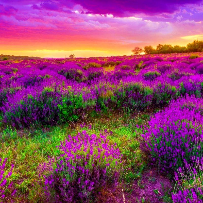 10 Best Spring Pictures For Desktop FULL HD 1920×1080 For PC Desktop 2018 free download spring wallpapers hd download free pixelstalk 7 800x800