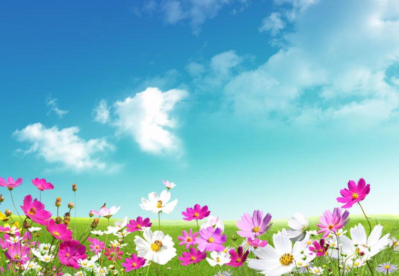 10 Best Hd Spring Wallpaper Backgrounds FULL HD 1080p For PC Background 2020 free download spring wallpapers hd download free pixelstalk 9 800x554