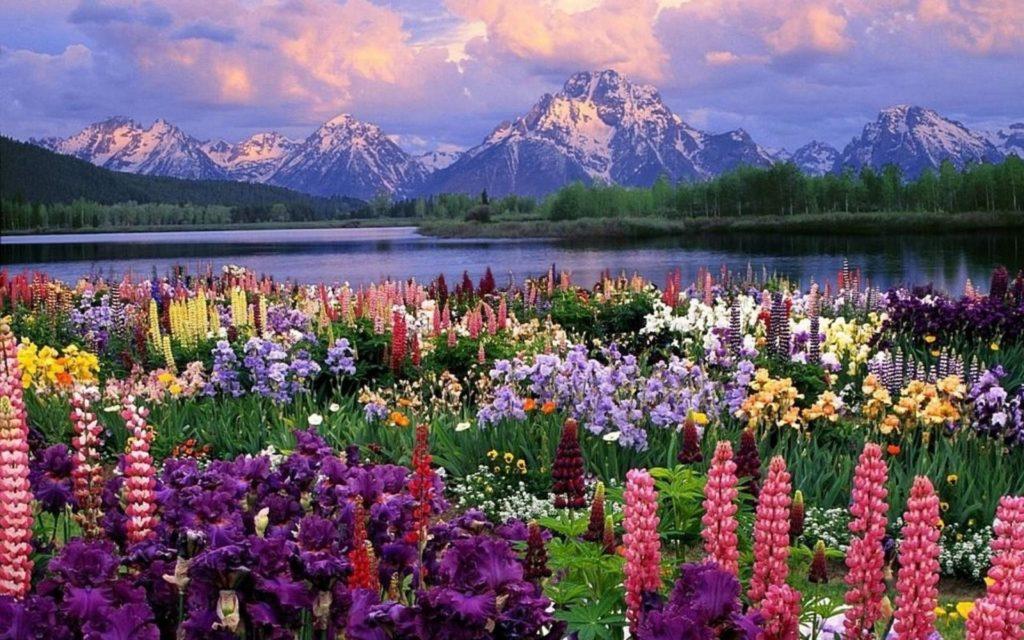 10 Latest Free Springtime Desktop Wallpaper FULL HD 1920×1080 For PC Background 2018 free download springtime desktop wallpaper 60 images 1024x640