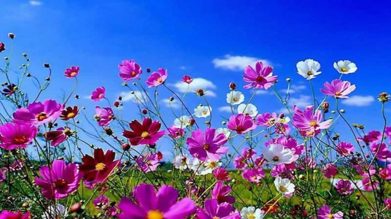 springtime wallpaper desktop free desktop wallpapers spring scenes