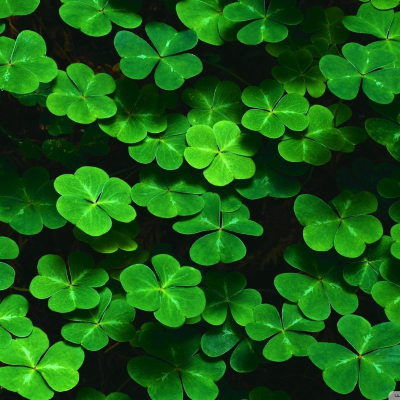 10 New St. Patricks Day Backgrounds FULL HD 1920×1080 For PC Desktop 2018 free download st paddys 2018 celebrations jd mcgillicuddys 800x800