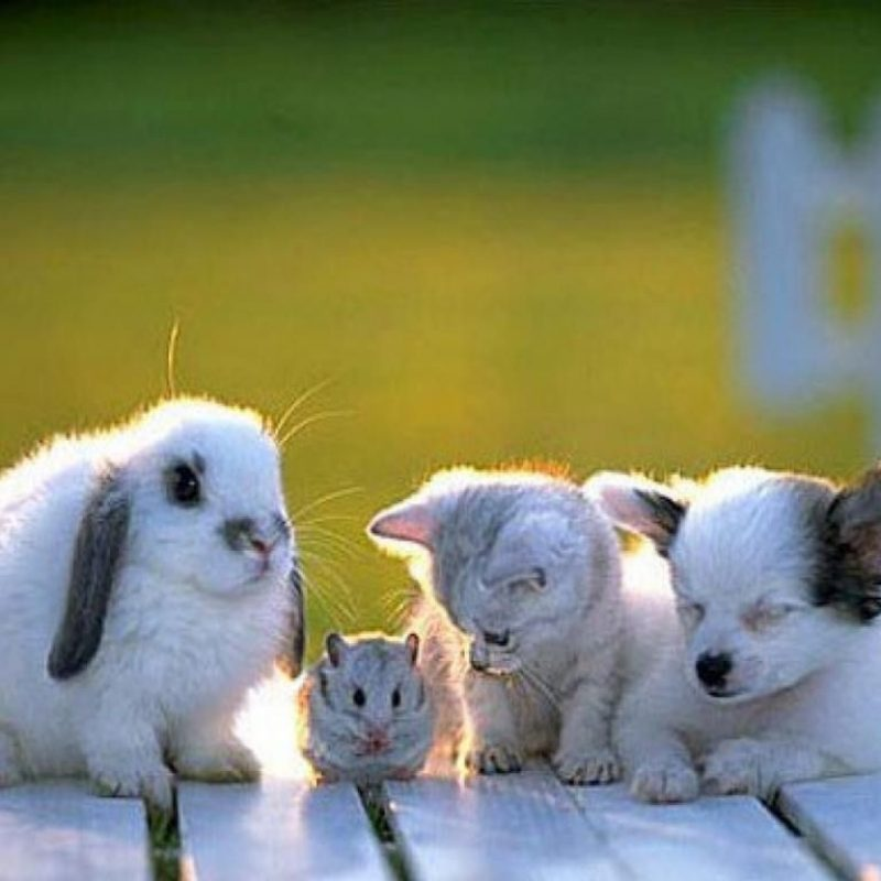 10 New Wallpapers Of Baby Animals FULL HD 1920×1080 For PC Desktop 2018 free download stressed about the election look at these baby animals baby 800x800