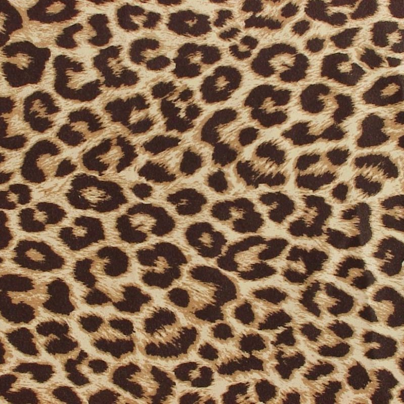 10 Top Leopard Print Wallpaper Hd FULL HD 1920×1080 For PC Background 2020 free download stunning leopard print wallpaper hd desktop for cheetah inspiration 800x800