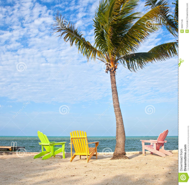 10 New Palm Tree And Beach Pictures FULL HD 1080p For PC Background 2018 free download summer beach scene with palm trees and lounge chairs stock image 800x778
