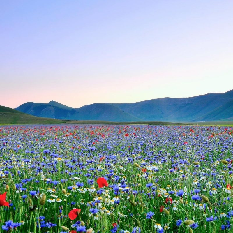 10 Latest Field Of Flowers Wallpaper FULL HD 1080p For PC Background 2018 free download summer field of flowers wallpaper hd media file pixelstalk 800x800
