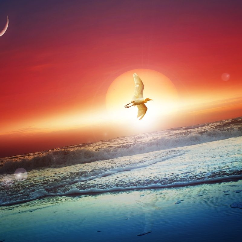10 Most Popular Moon And Sun Wallpapers FULL HD 1080p For PC Desktop 2018 free download sun moon wallpapers hd wallpapers id 14514 800x800