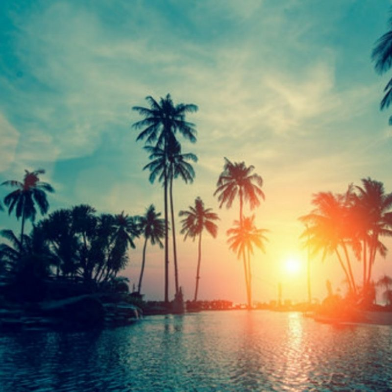 10 Best Hd Palm Tree Wallpaper FULL HD 1080p For PC Desktop 2018 free download sunset with palm trees wallpaper wallpaper studio 10 tens of 800x800