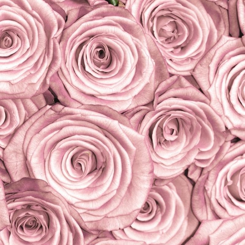 10 Best Wallpaper For Iphone 7 Rose Gold FULL HD 1080p For PC Background 2020 free download tap and get free app e2ac86 stylish pink roses close up pattern 1 800x800