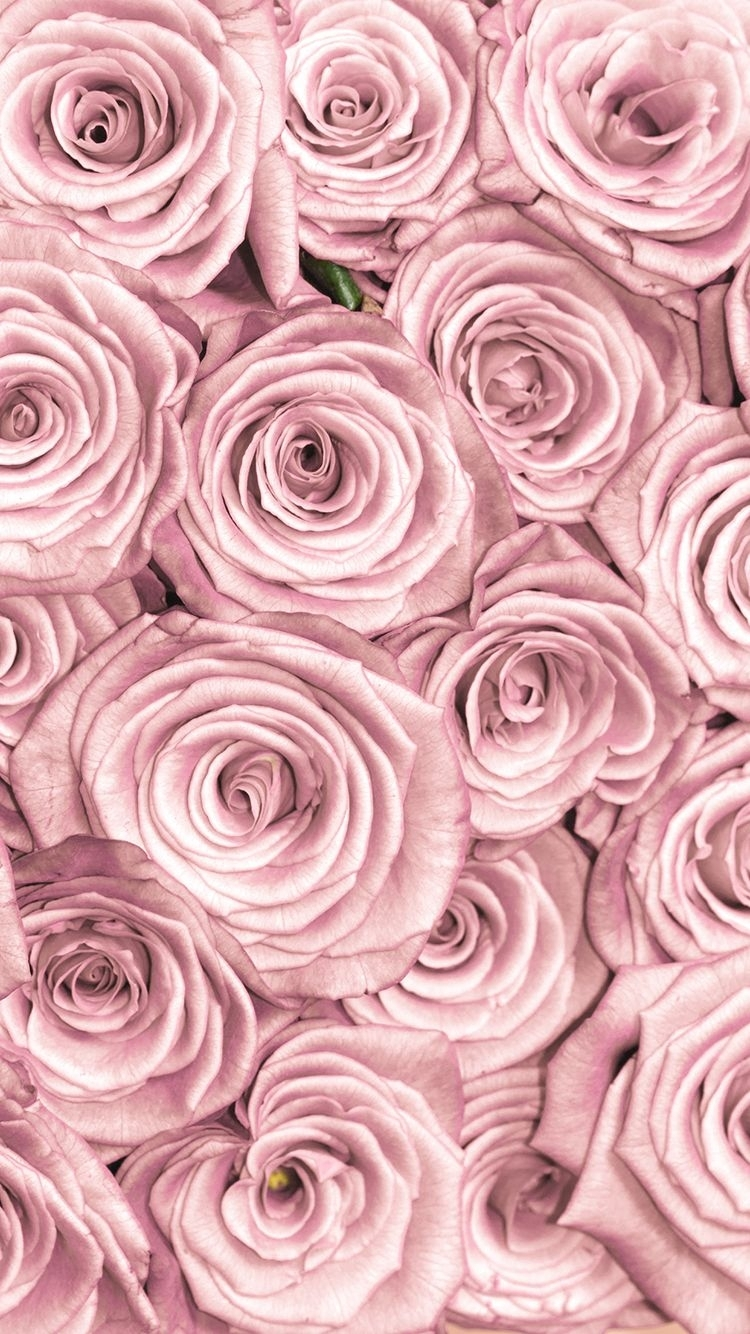 tap and get free app ⬆ stylish pink roses close up pattern