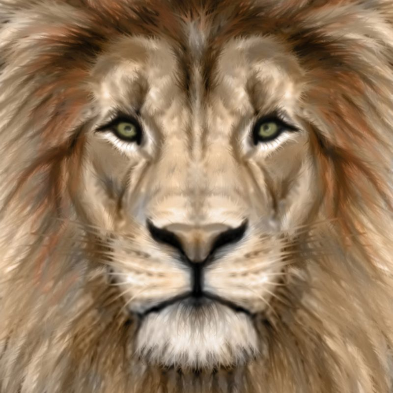 10 Most Popular Images Of Lions Faces FULL HD 1920×1080 For PC Desktop 2018 free download terrific photography pointers to improve everyones shots click 800x800