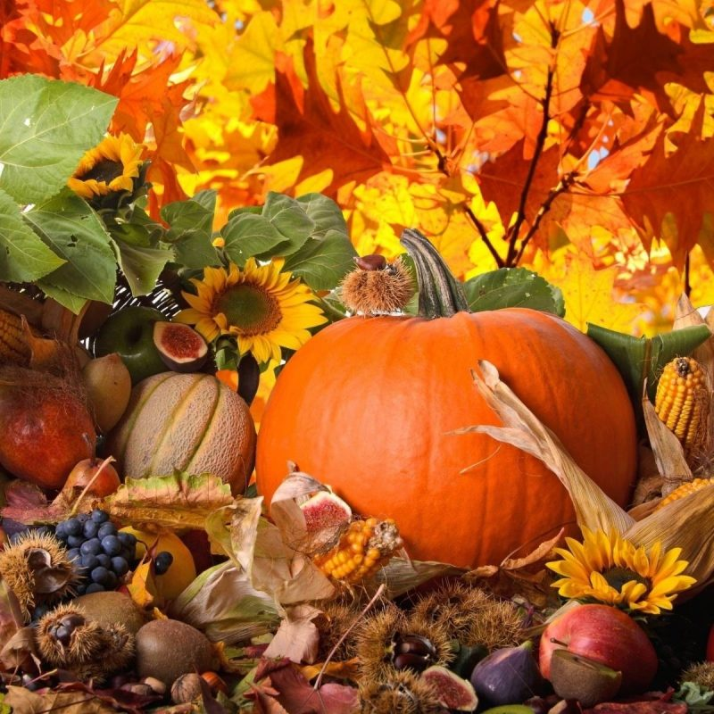 10 Latest Free Thanksgiving Computer Wallpaper FULL HD 1080p For PC Background 2018 free download thanksgiving desktop wallpaper c2b7e291a0 download free cool wallpapers for 800x800