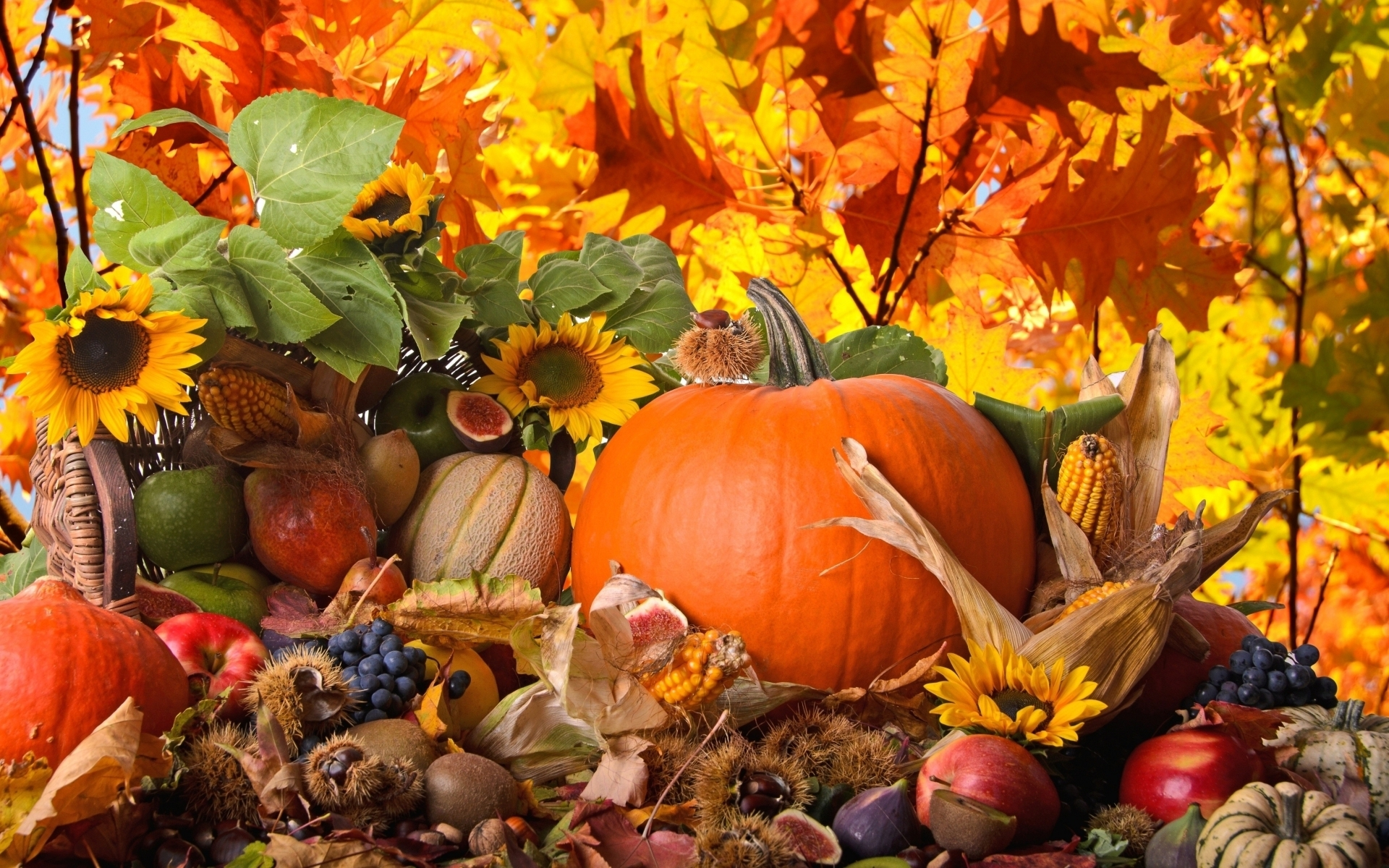 thanksgiving full hd wallpaper and background image | 1920x1200 | id