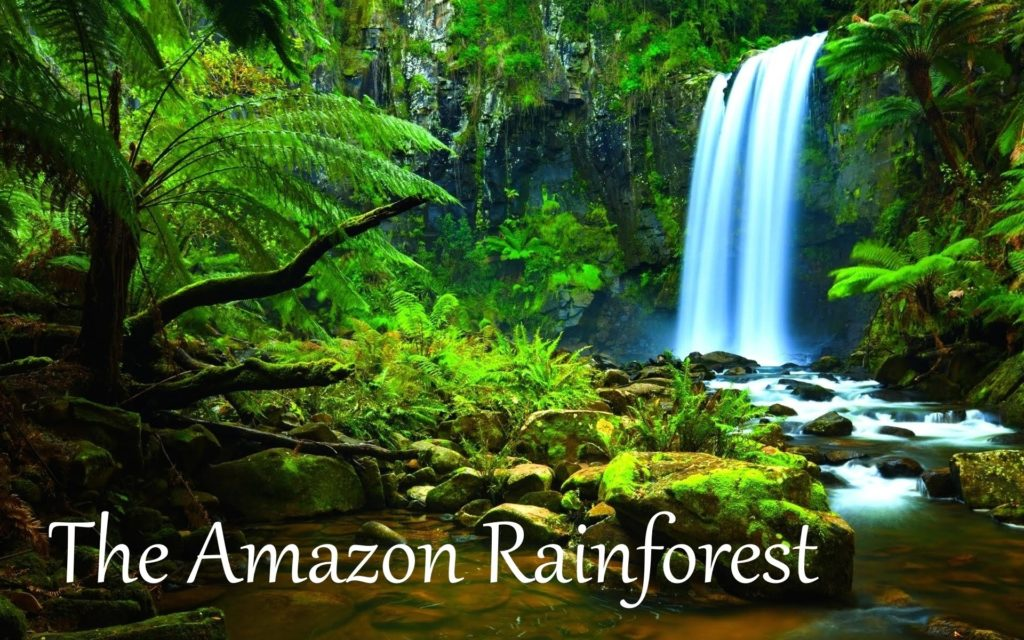 10 New Pics Of The Amazon Rainforest FULL HD 1920×1080 For PC Desktop 2020 free download the amazon rainforest facts hd youtube 1024x640