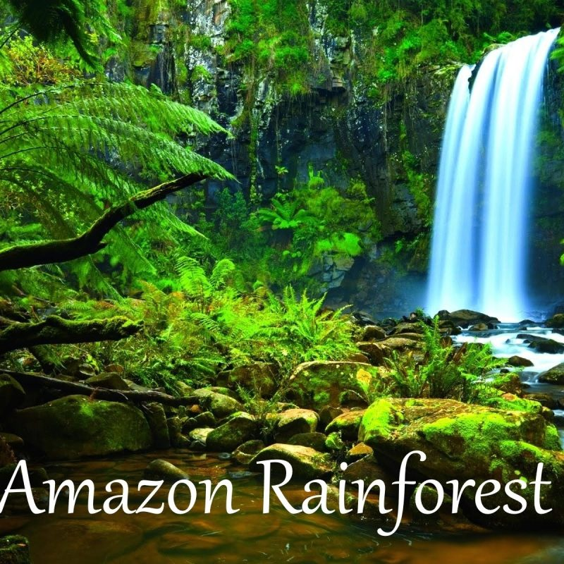 10 Most Popular Pictures Of Amazon Rainforest FULL HD 1920×1080 For PC Background 2020 free download the amazon rainforest facts hd youtube 2 800x800