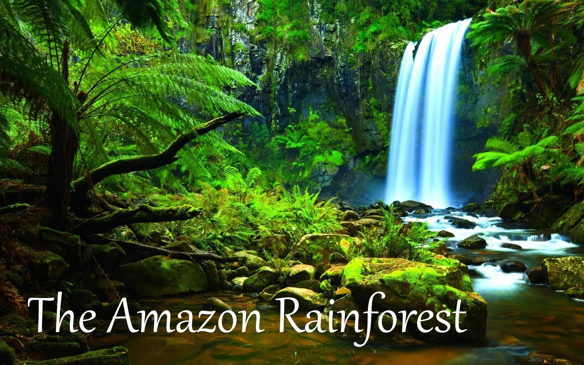 the amazon rainforest facts (hd) - youtube