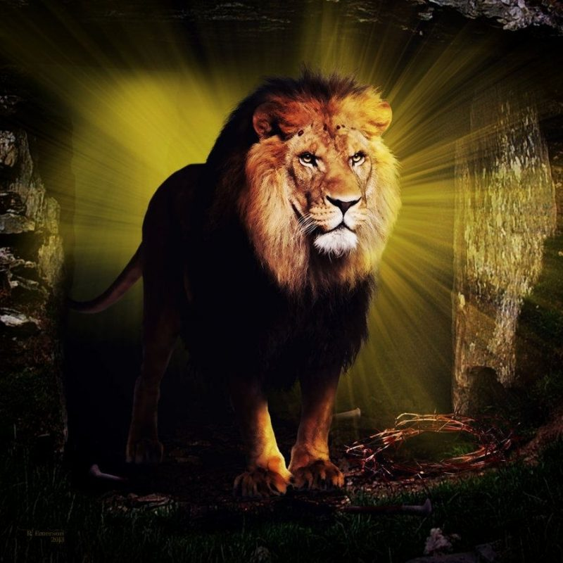 10 Latest Lion Of Judah Images FULL HD 1080p For PC Background 2020 free download the lion of judahrobhas1left on deviantart lion of judah 1 800x800
