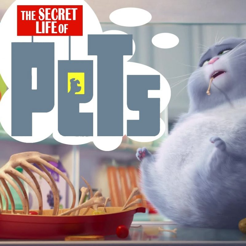 10 New Secret Life Of Pets Wallpaper FULL HD 1920×1080 For PC Desktop 2018 free download the secret life of pets images the secret life of pets hd wallpaper 800x800