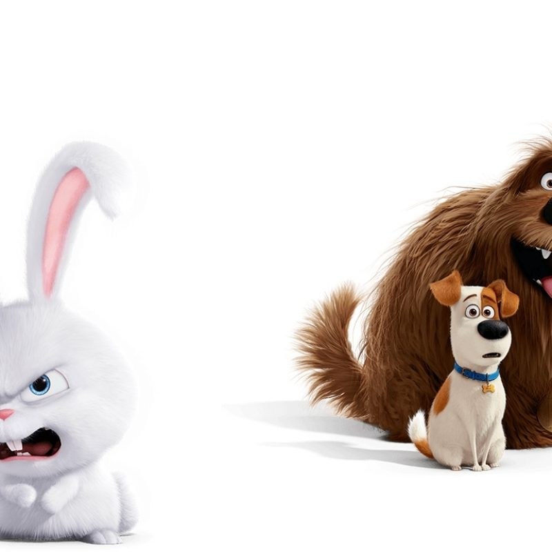 10 New Secret Life Of Pets Wallpaper FULL HD 1920×1080 For PC Desktop 2018 free download the secret life of pets rabbit and dogs wallpaper 2018 in the secret 800x800