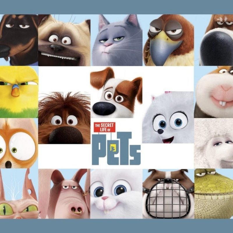 10 New Secret Life Of Pets Wallpaper FULL HD 1920×1080 For PC Desktop 2018 free download the secret life of pets wallpaperpeachmog on deviantart 800x800