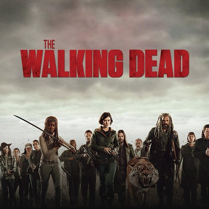 10 Top The Walking Dead Season 8 Wallpaper FULL HD 1080p For PC Background 2018 free download the walking dead season 8 wallpapers wallpaper cave 800x800