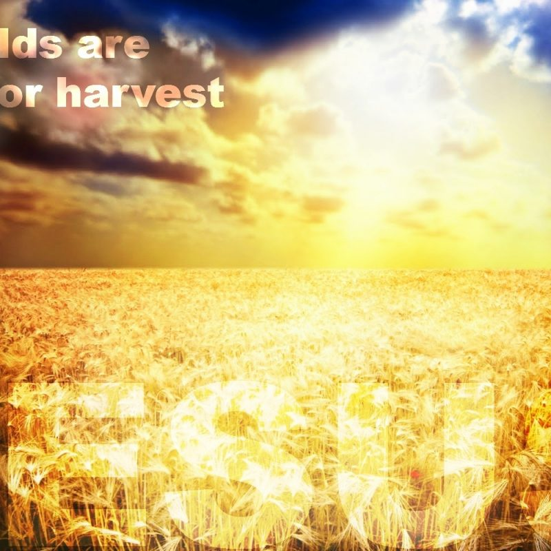10 Latest Jesus Pic With Bible Verse FULL HD 1080p For PC Background 2018 free download the white harvest what jesus did and didnt say bible verses 800x800