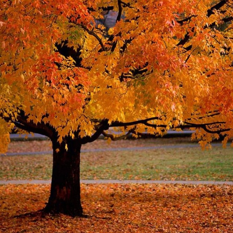 10 Top Images Of Fall Scenery FULL HD 1080p For PC Background 2018 free download theres something awesome about all the seasons but autumn is 800x800