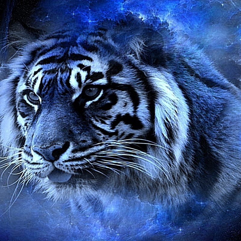 10 Latest Cool Pics Of Tigers Full Hd 1080p For Pc Desktop