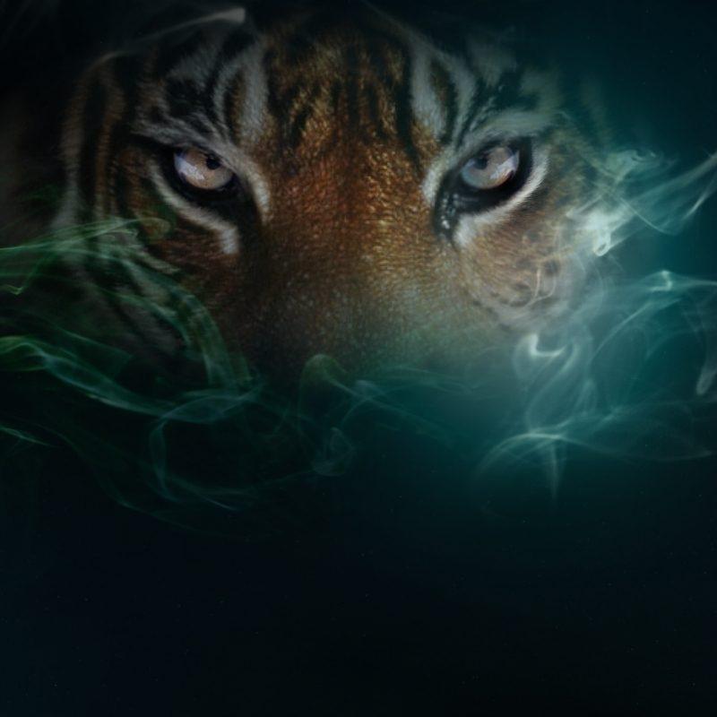 10 Latest Cool Pics Of Tigers FULL HD 1080p For PC Desktop 2020 free download tiger wallpaper desktop 1920x1200 tiger wallpapers desktop 53 800x800