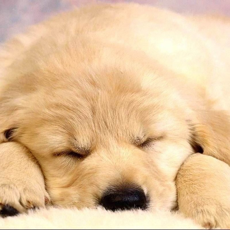 10 Most Popular Puppies Wallpapers Free Download FULL HD 1920×1080 For PC Background 2018 free download tonikum bayer puppies wallpapers free hd wallpapers pinterest 800x800
