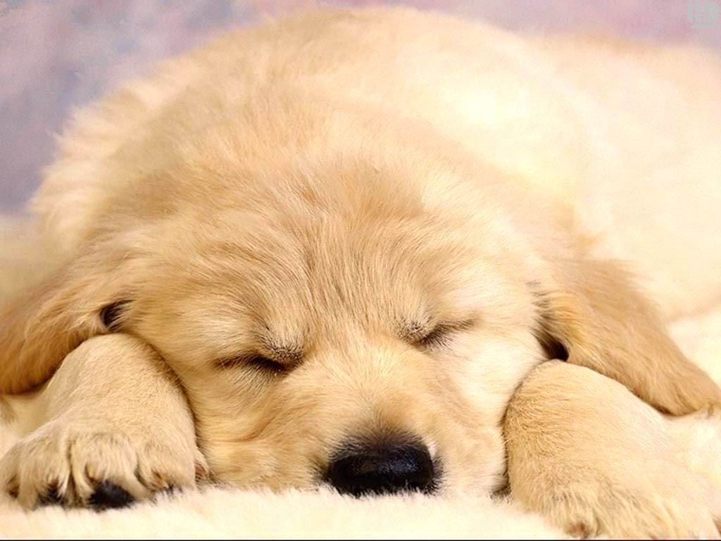 10 Most Popular Puppies Wallpapers Free Download FULL HD 1920×1080 For PC Background