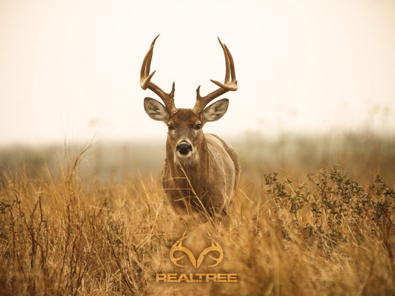 10 Best Whitetail Deer Desktop Background FULL HD 1920×1080 For PC Background 2018 free download top whitetail deer hd wallpapers wallpapers shared deer 800x600