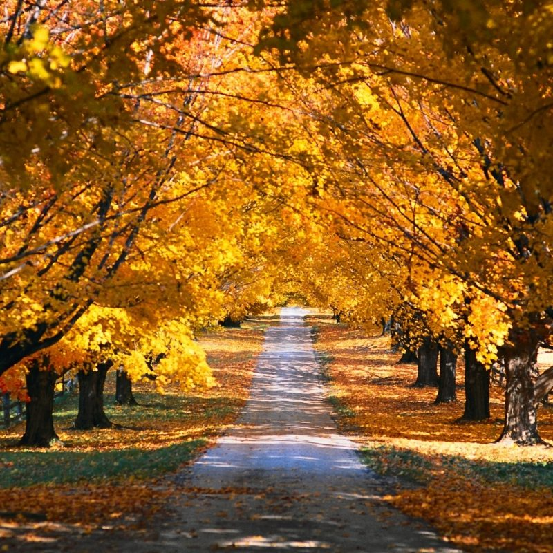 10 Most Popular Autumn Hd Wallpapers 1080P FULL HD 1080p For PC Desktop 2020 free download tree tunnel road autumn e29da4 4k hd desktop wallpaper for 4k ultra hd 800x800