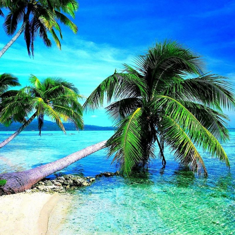 10 Best Tropical Beach Wallpaper Desktop FULL HD 1080p For PC Desktop 2020 free download tropical beach wallpaper desktop c2b7e291a0 800x800