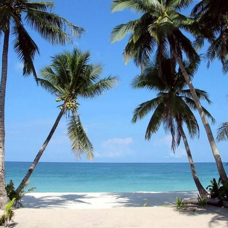 10 Top Beach Palm Tree Background FULL HD 1920×1080 For PC Background 2018 free download tropical beaches with palm trees wallpapers desktop background hd 1 800x800