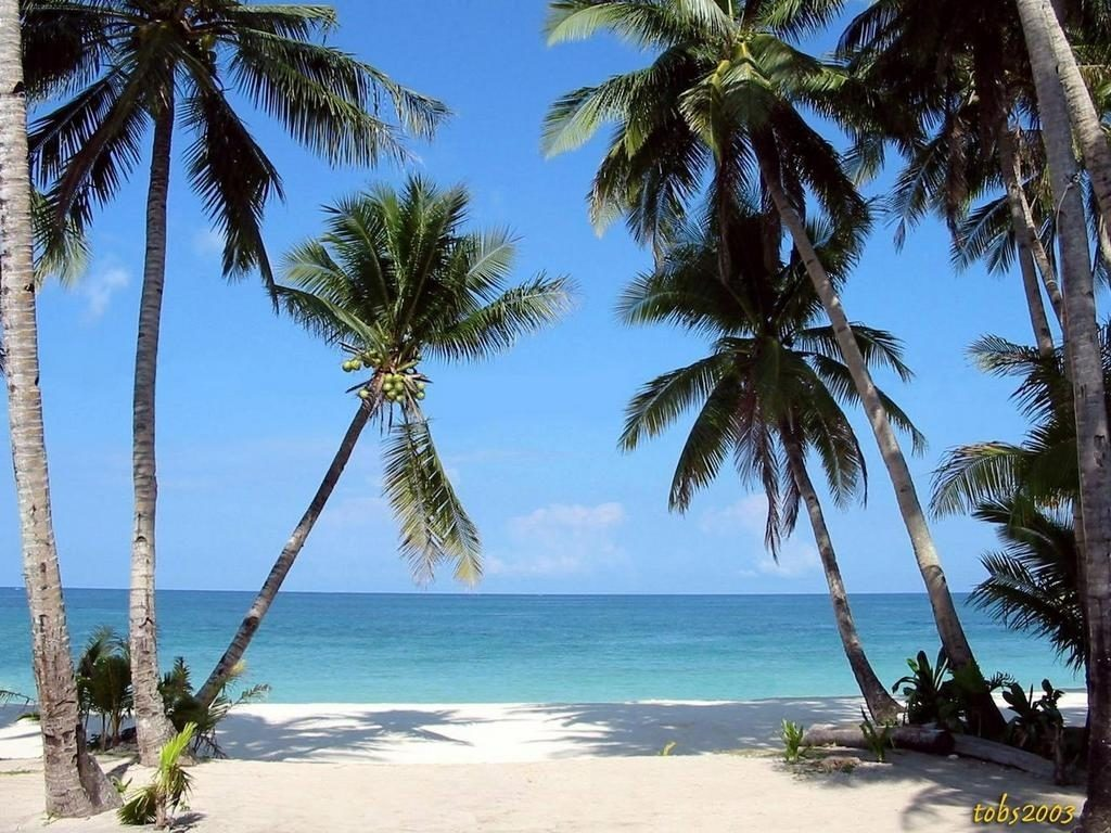 10 New Beach And Palm Trees Background FULL HD 1920×1080 For PC Background 2018 free download tropical beaches with palm trees wallpapers desktop background hd 1024x768