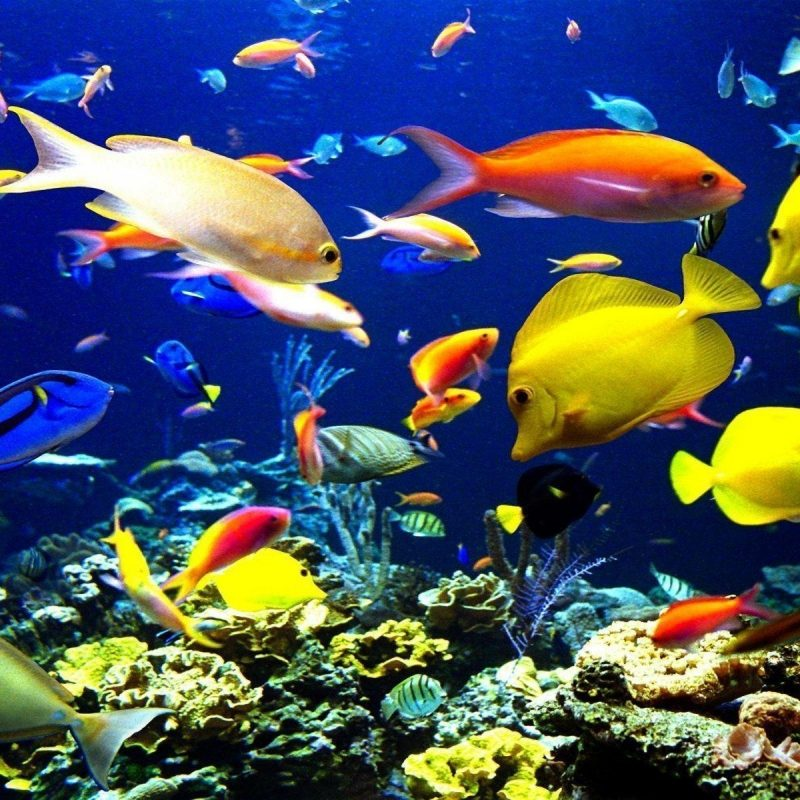 10 Most Popular Tropical Fishes Wallpapers Hd FULL HD 1920×1080 For PC Background 2018 free download tropical fish backgrounds wallpaper cave 1 800x800
