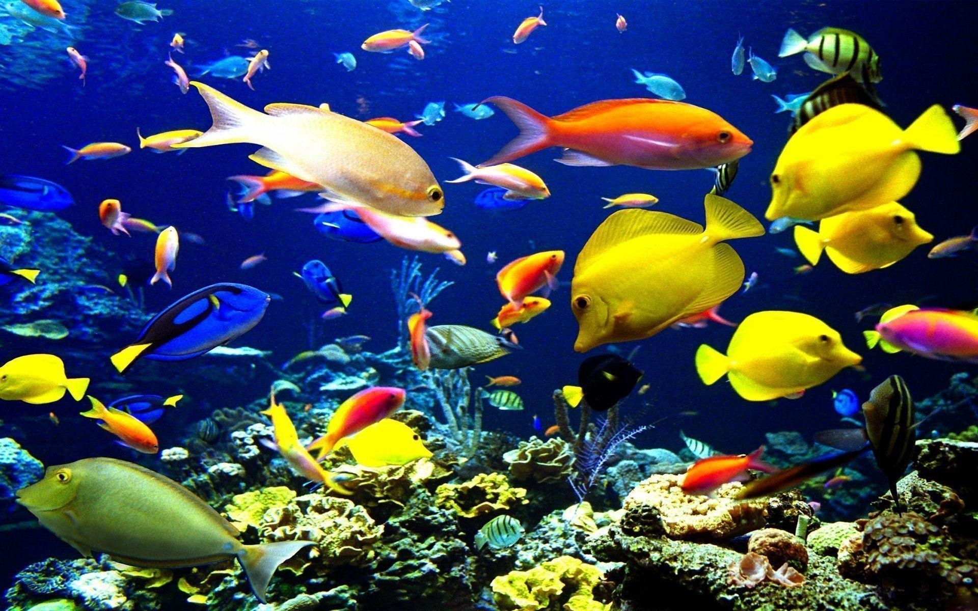 tropical fish backgrounds - wallpaper cave