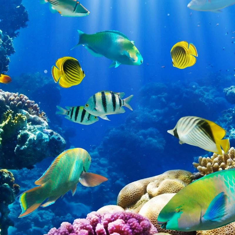 10 Most Popular Tropical Fishes Wallpapers Hd FULL HD 1920×1080 For PC Background 2018 free download tropical fish full hd wallpaper and background image 2000x1100 800x800