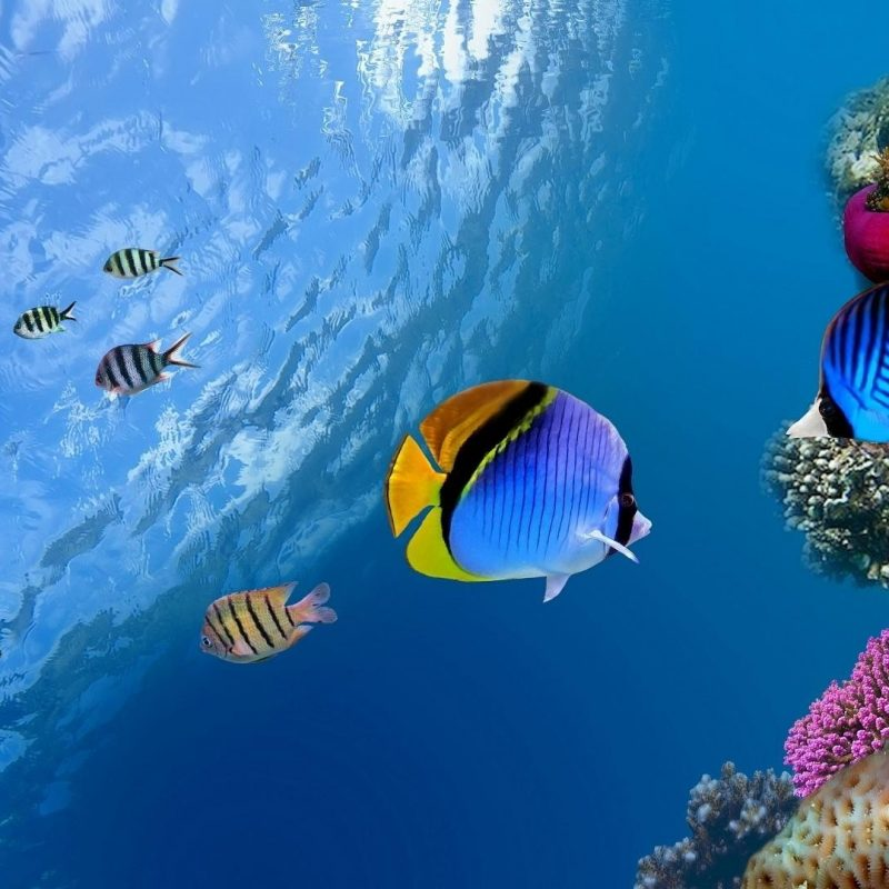 10 Top Tropical Fish Wallpaper Hd FULL HD 1920×1080 For PC Desktop 2018 free download tropical fish wallpaper 134582 800x800