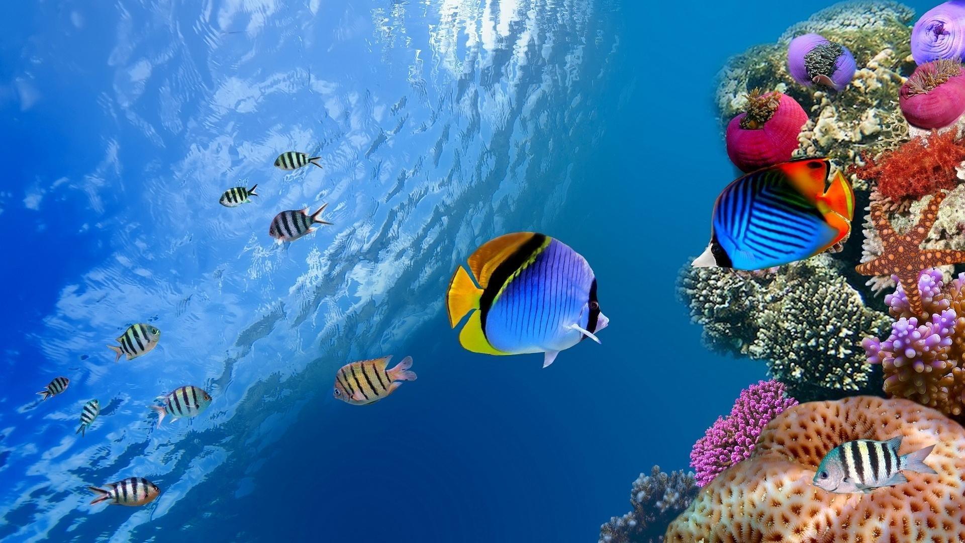 tropical fish wallpaper | (134582)