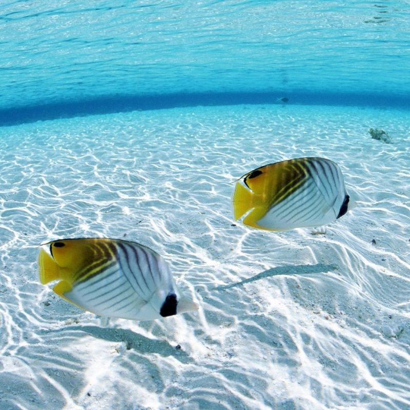 10 Most Popular Tropical Fishes Wallpapers Hd FULL HD 1920×1080 For PC Background 2018 free download tropical fish wallpaper hd download best tropical fish wallpaper 1 800x800