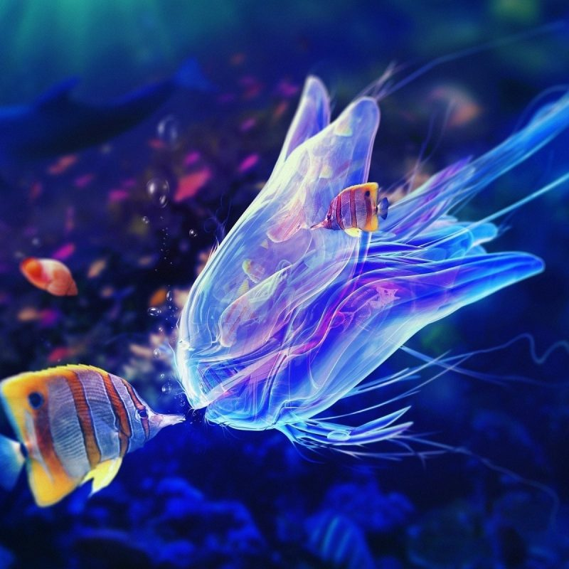 10 Top Tropical Fish Wallpaper Hd FULL HD 1920×1080 For PC Desktop 2018 free download tropical fish wallpaper hd free tropical fish wallpaper 002 top 800x800