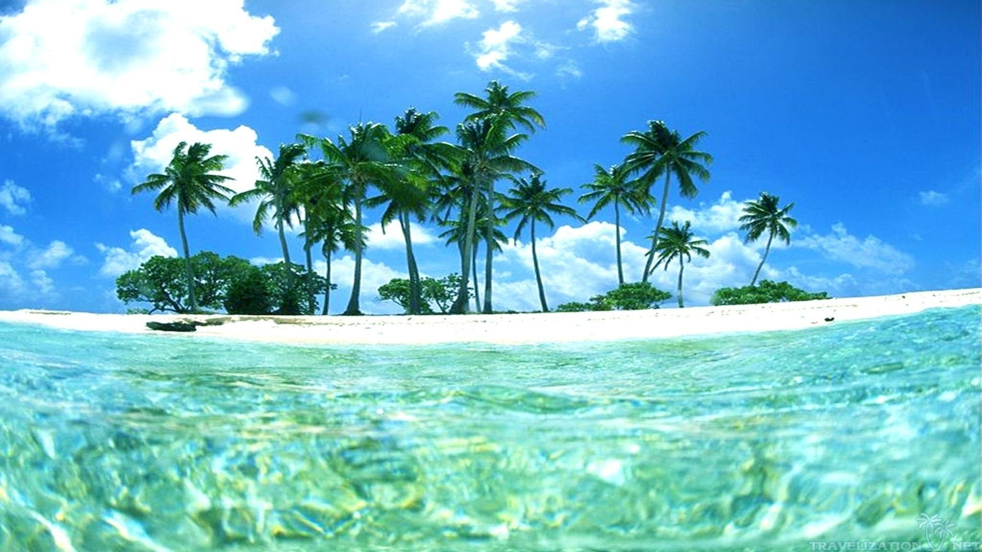 tropical island wallpaper with fish (49+ images)