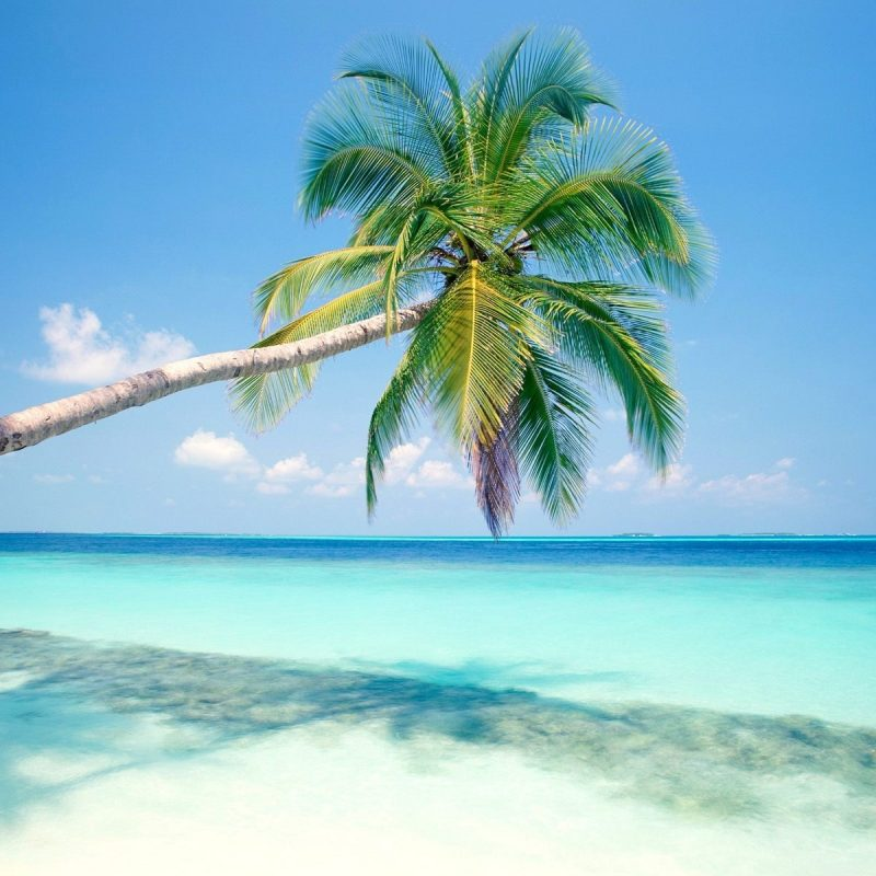 10 Best Tropical Island Wallpaper Hd FULL HD 1080p For PC Background 2020 free download tropical island wallpapers hd wallpapers id 3739 800x800