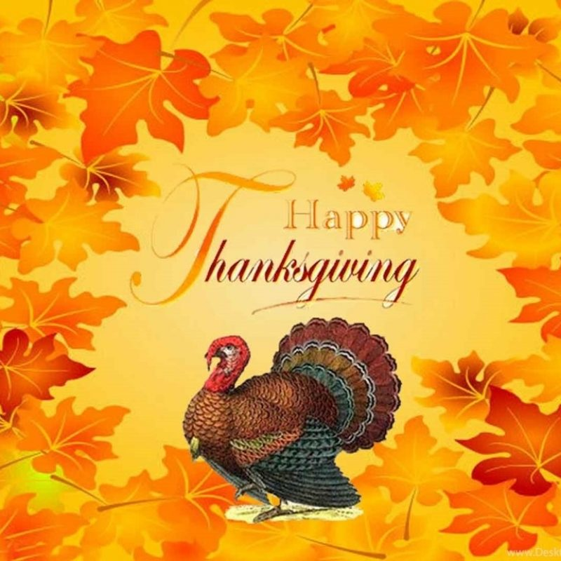 10 Latest Thanksgiving Turkey Wallpaper Hd FULL HD 1920×1080 For PC Desktop 2020 free download turkey pictures for thanksgiving desktop backgrounds desktop background 800x800