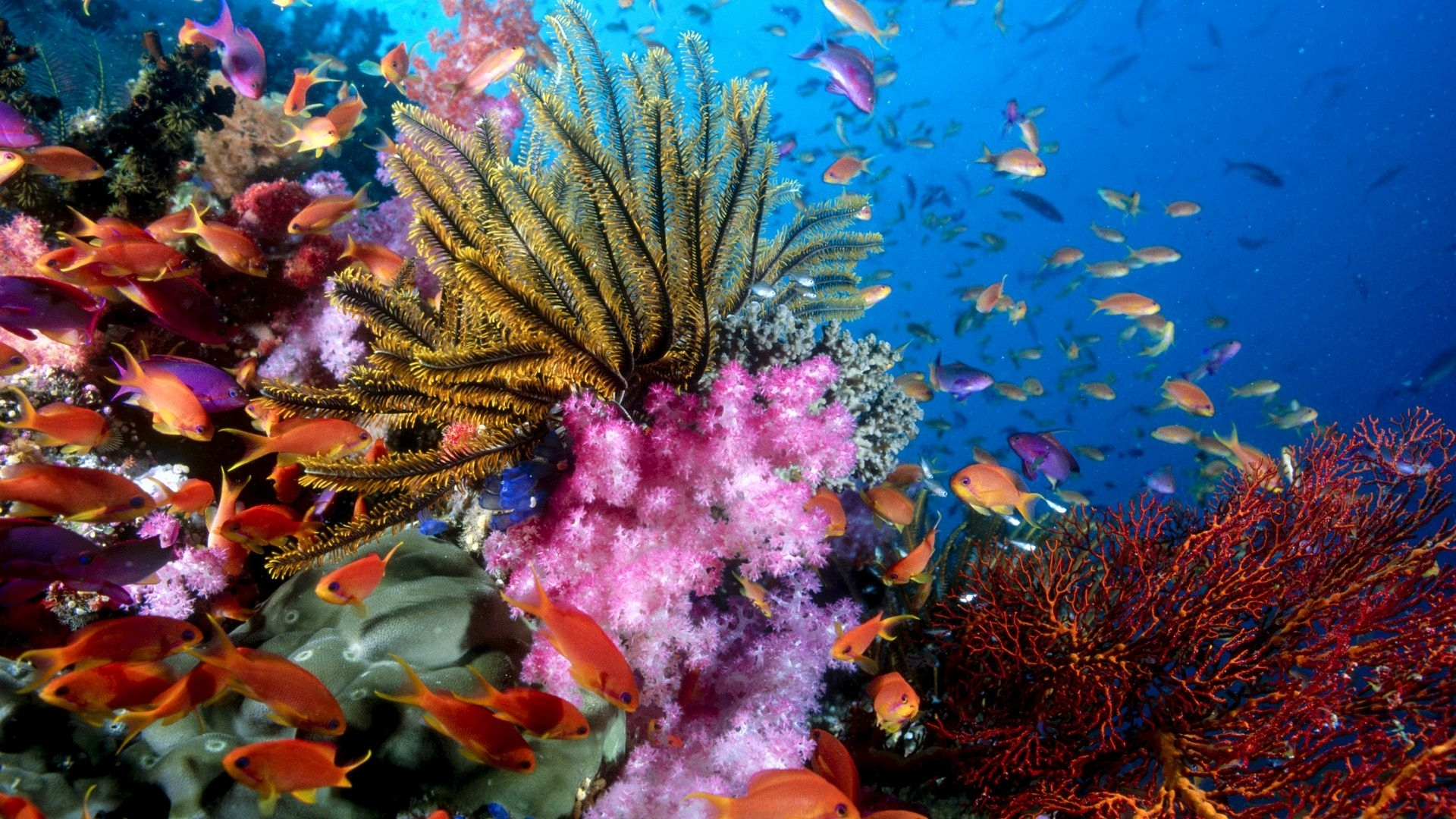 under sea life desktop background hd 1920x1200 | deskbg | sea