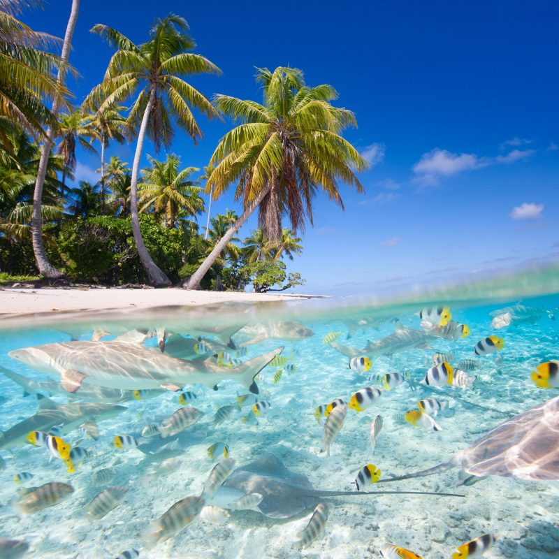 10 Best Tropical Island Wallpaper With Fish FULL HD 1920×1080 For PC Background 2018 free download underwater fish fishes tropical ocean sea reef beah wallpaper 800x800