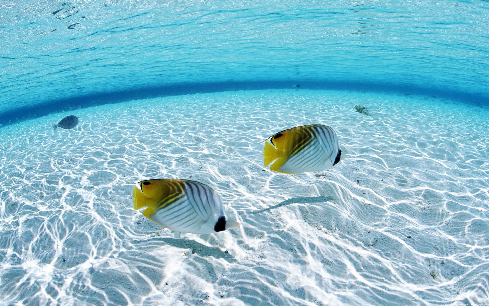 underwater on the sea | fish